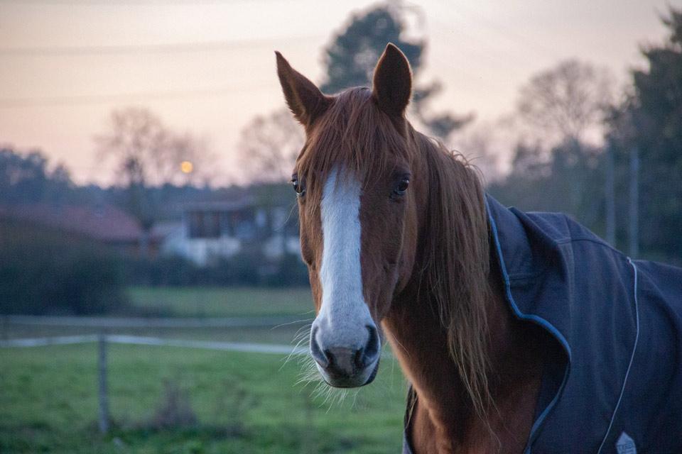 paarden en paardendeken