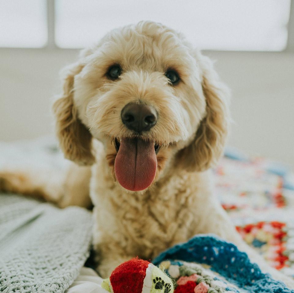 hond op deken of hondenkussen